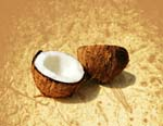 Coconut - LeBootCamp